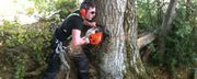 Looking for Tree Removal and Surgery in Dublin - Elite Tree Services